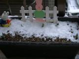 雪に埋まったチューリップのプランター